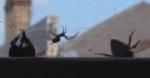 No bee left behind: video captures bumblebee saving friend from spiderweb