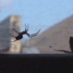 No bee left behind: video captures bumblebee saving friend from spider web