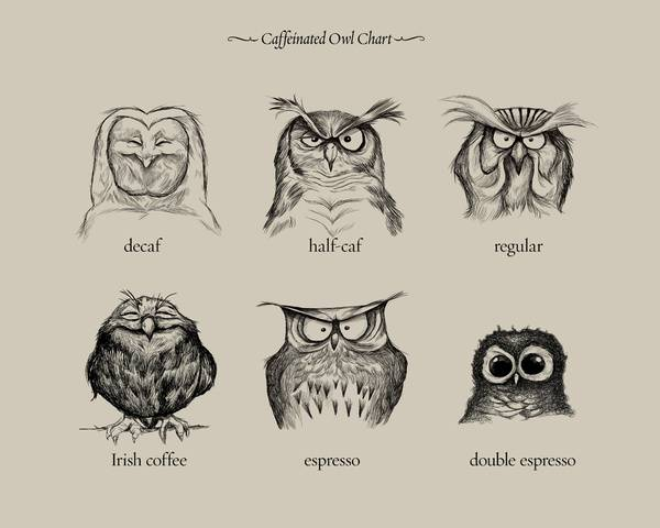 Which owl are you. Must credit : Dave Mocttram Link baclk - http://society6.com/davemott/caffeinated-owls_print#1=45